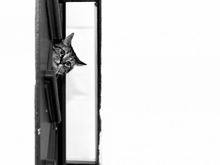 Boxed In | Mr. Kitty | Cat Photography | Upstate NY | Albany NY Photographer Dave Butterworth | EyeWasHere Photography | Eye Was Here