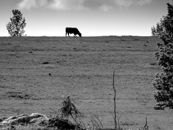 Bull On A Hill | Black and White Farm Animal Landscape Photography by Dave Butterworth | EyeWasHere Paint it Black