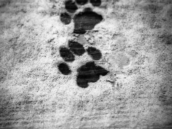 Footprints | Mr. Kitty | Cat Photography | Upstate NY | Albany NY Photographer Dave Butterworth | EyeWasHere Photography | Eye Was Here