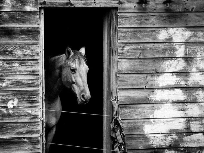 Horse | Black & White Horse Portrait Photo by Dave Butterworth | EyeWasHere Paint it Black