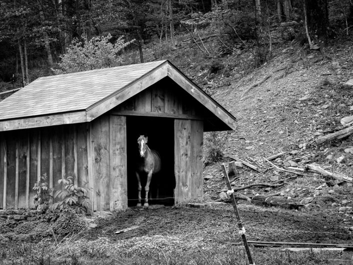 Horse In A Shed | Black and White Horse Photograph by Dave Butterworth | EyeWasHere Paint it Black