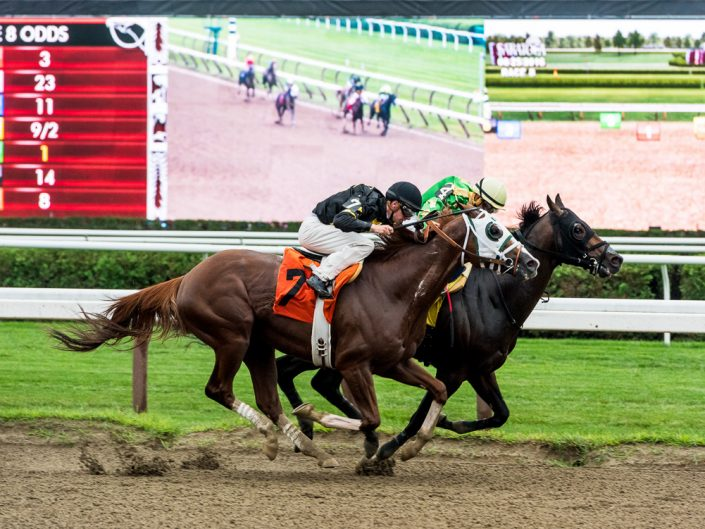 Saratoga Race Track Photography   Saratoga Race Course   Horse Racing   Thoroughbred   Equine   Equestrian   Photographer Dave Butterworth   EyeWasHere   Eye Was Here Photography