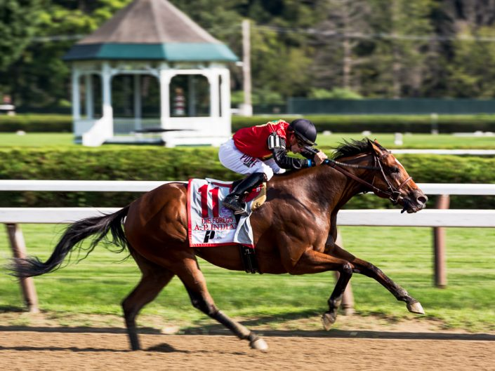 A.P. Indian Horse   Saratoga Race Track Photography   Saratoga Race Course   Horse Racing   Thoroughbred   Equine   Equestrian   Photographer Dave Butterworth   EyeWasHere   Eye Was Here Photography