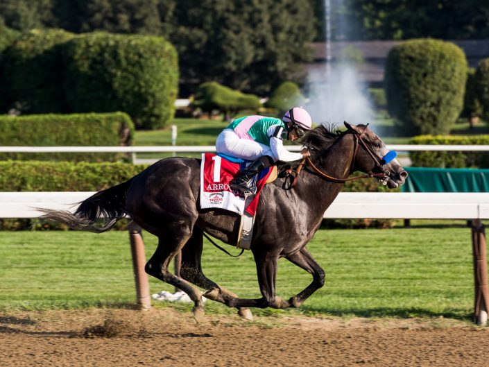 Arrogate Horse | Saratoga Race Track Photography | Saratoga Race Course | Horse Racing | Thoroughbred | Equine | Equestrian | Photographer Dave Butterworth | EyeWasHere Photography