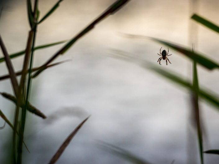 Spider | Upstate NY Nature Spider Photograph by Dave Butterworth | EyeWasHere Playing With A Camera, Upstate NY Landscape Photography