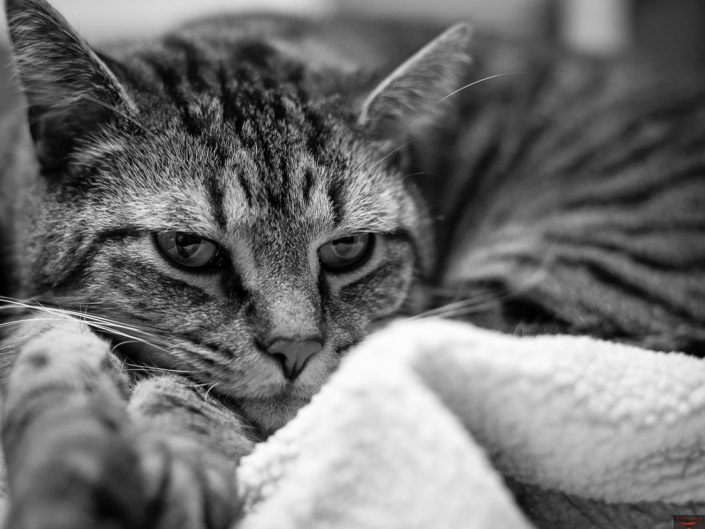 Tired | Mr. Kitty | Cat Photography | Upstate NY | Albany NY Photographer Dave Butterworth | EyeWasHere Photography | Eye Was Here