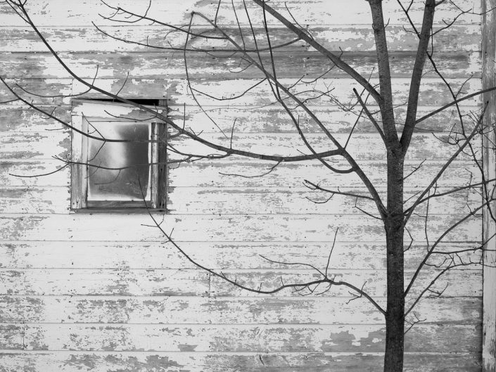 Tree & Window | Thacher Park Black and White Photography by Dave Butterworth | EyeWasHere Paint it Black