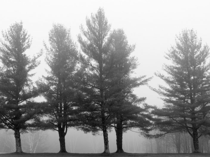 Tree Line | Catskills Black and White Photography by Dave Butterworth | EyeWasHere Paint it Black