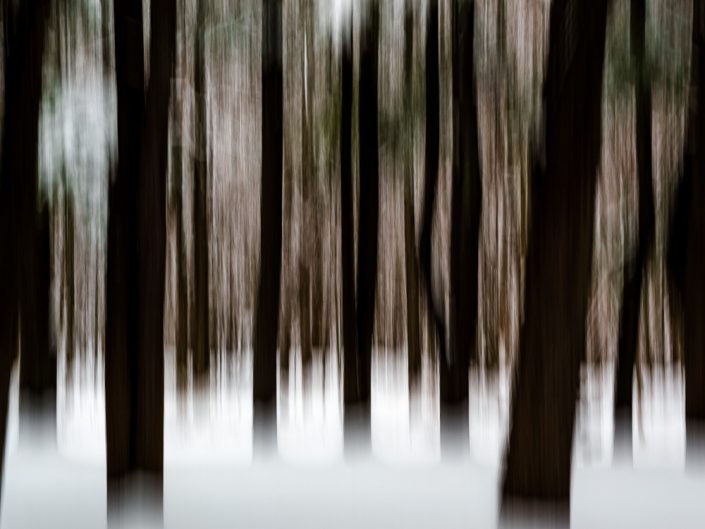 Trees & Snow | Motion Blur Photography | Zoom Effect | Camera Movement | Albany NY Photographer Dave Butterworth | EyeWasHere Photography | Eye Was Here