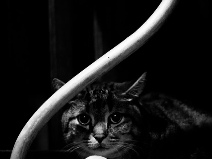 Under The Table | Mr. Kitty | Cat Photography | Upstate NY | Albany NY Photographer Dave Butterworth | EyeWasHere Photography | Eye Was Here