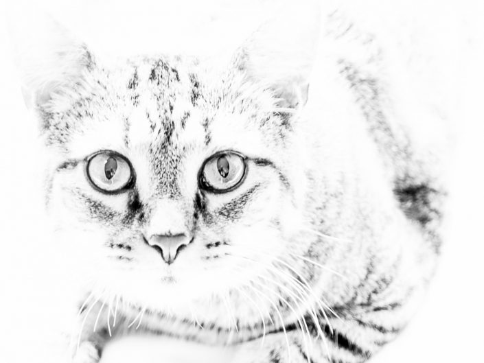White Kitty | Mr. Kitty | Cat Photography | Upstate NY | Albany NY Photographer Dave Butterworth | EyeWasHere Photography | Eye Was Here