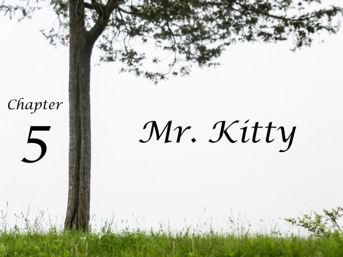 Mr. Kitty