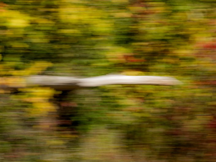 White Tree | Motion Blur Photography | Zoom Effect | Camera Movement | Albany NY Photographer Dave Butterworth | EyeWasHere Photography | Eye Was Here