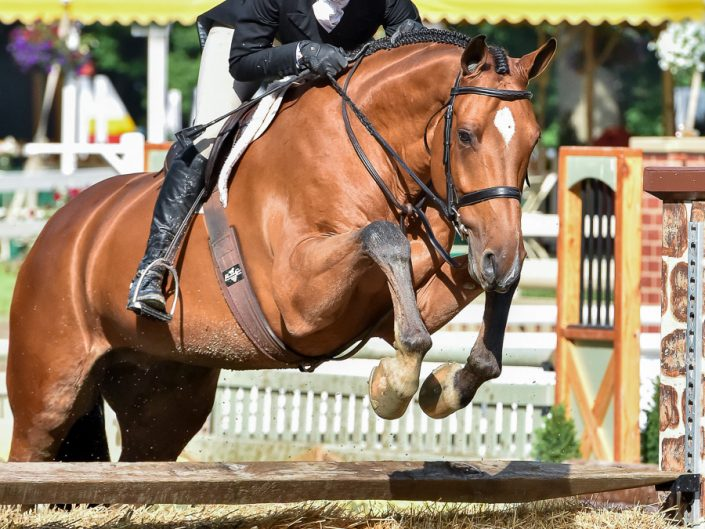 Hunters Horse Show Photography | Equestrian Photographer Dave Butterworth | Upstate NY, Saratoga Springs, Gulfport MS, Virginia, South Carolina, Saugerties and Florida | Horse Photography | Show Jumping | Hunter Jumper | EyeWasHere